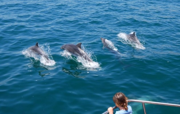 Whale and Dolphin Spotting Cruises are Popular