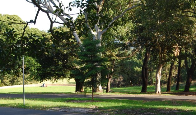 Centennial Park covers more than 220 hectares of lush Greenery