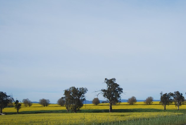Fertile Countryside of Riverina Region, NSW