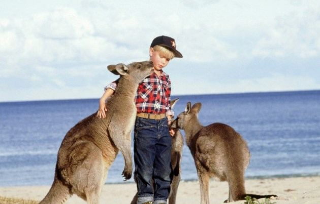 Getting up close with Kangaroos