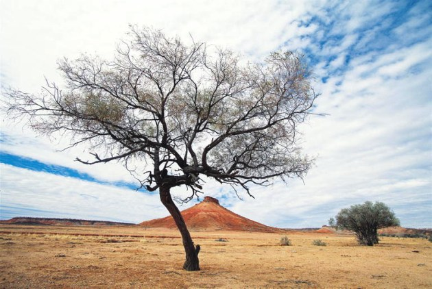 Expansive Landscape, Boulia Photo Courtesy of Tourism Queensland