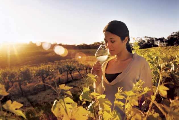 South Australia Grapes, Vines and Wineries