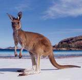 Western Australia Tourist Guide