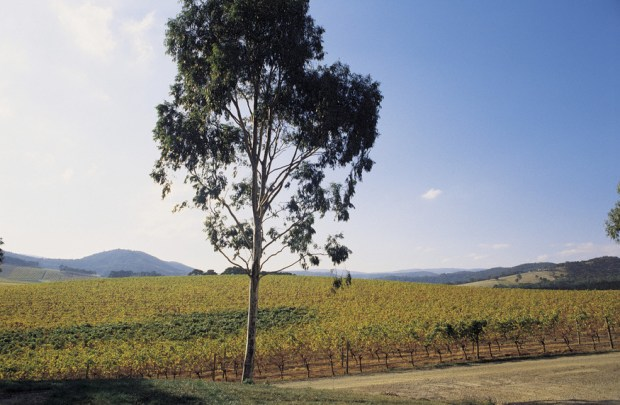 De Bortoli Winery in the Yarra Valley and Dandenong Ranges