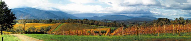 View of some of the splendid vineyards
