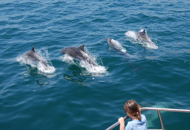 Dolphin Cruise, Western Australia