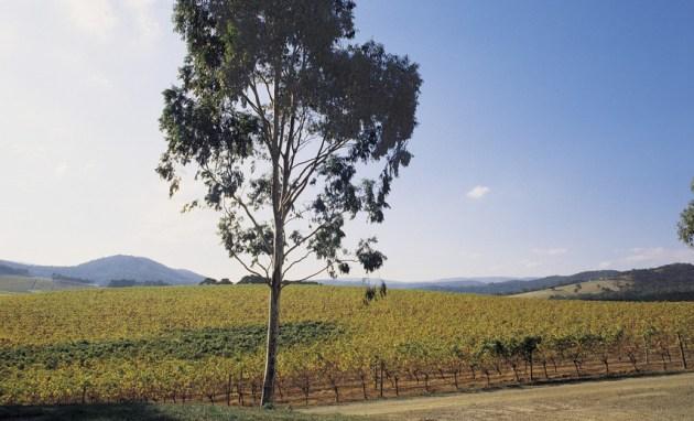 De Bortoli Winery, Yarra Valley and the Dandenong Ranges
